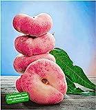 BALDUR-Garten Teller-Pfirsich 'PlatiforTWO', Pfirsichbaum 1 Pflanze, Prunus persica