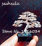 Mini-Wacholdersamen mit Bleistiftspitze, seltene Baumsamen, mehrjährige Pflanze, italienische...