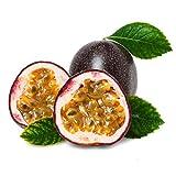CFPacrobaticS 40Pcs Tropical Exotic Vine Passion Lila Passiflora Edulis Fruchtsamen Wachsen Leicht,...