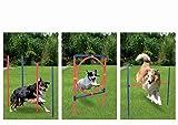 Profi Hundetrainigsset Agility 3 Übungen für Ihren Hund GRATIS TRAGETASCHE ,bereits seit 5 Jahren...