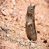 خلفيات سنجاب-wallpapers of the squirrel 4k