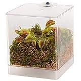 Swampworld Mini-Terrarium - Inklusive Fleischfressende Pflanze Venusfliegenfalle und Moos - Mit...