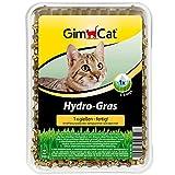 GimCat Hydro-Gras - Frisches Katzengras aus kontrolliertem Feldanbau in nur 5 bis 8 Tagen - 1 Schale...