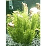 Miss-an Aquarium Dekorationen 3Pcs Fisch Pflanzen Aus Seide Stoffe Kunststoff, Ungiftig Und Sicher...
