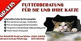 Flyer Tierische Futterberatung - Ernärhungsberatung für Ihre Katze - Ihr Kitten - Hochwertiges...