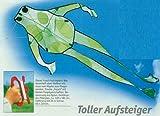 Kinderdrachen, Sportlenkdrachen Drache FROSCH grün, Flugdrache mit großer Spannweite