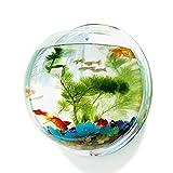 Aquarium zum Aufhängen mit Spiegel auf der Rückseite aus Acryl
