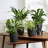 4er Set Luftreinigende Zimmerpflanzen | Vier Grünpflanzen mit Topf | Elho Übertopf | Höhe 25-30...
