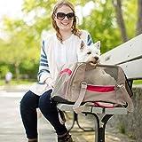 ACAMPTAR Rucksack für Hunde wasserdichte Fluggesellschaft für Katzen oder kleine...