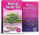 Bonsai Samen von Grow Buddha - Geschenkset - Züchten Sie Ihren eigenen Bonsai-Baum ganz einfach mit...