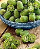 Keland Garten - 50pcs Selten Kiwi 'Issai' Grün/Rosa - Kletterpflanze Obstsamen Saatgu Bio Reich an...