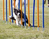 Diggar Agility-Training für Hunde Slalom Tunnel Sprungring Hürde Hundesport Training Reifen Hürde...