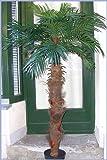 Künstliche Arekapalme,Kokosfaserstamm