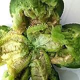 Gemüse- und Obstsamen Zhongke Luxiangshuai Melonensamen 300 Kapseln