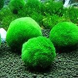 ECMQS 2.5-4.5 cm Mini Aquarium Pflanze Aquarium Garnelen Nano Für MARIMO Premium Qualität MOOS...