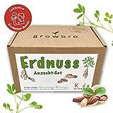 growbro Kids Erdnuss Anzuchtset, Garten Entdecker Set, Forscher Kinder, Natur entdecken, Geschenk fr...