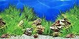 Pistachio Pet Aquarium-Hintergrundposter, doppelseitig, 45 x 100 cm