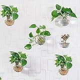 Beau Garden Pflanzengefäße zur Wandmontage, rund, Glas, zum Aufhängen, Blumentöpfe, Terrarien, 6...