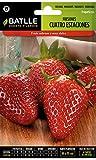Batlle aromatic seeds - Strawberries 4 seasons (Seeds - 8cm)