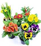 Frhlingsblumen Set 10, Narzissen, Tulpen, Primeln & Stiefmtterchen