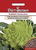 Dürr-Samen - 50 x Brokkoli 'Ramanesco' Saatgut für Balkon, Garten, Hochbeet & Gewächshaus -...