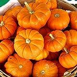 Samen-Paket: 20pcs / Bag Kürbiskerne RARERainbow Seed Gemüse SeedsMini Bonsai Seeder Heim & amp;...