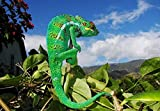 Lsping 3D Puzzle 500 Teile Reptilien Tier 52x38cm