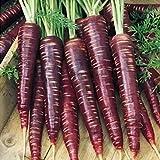 Lila Karottensamen 200+ (Daucus Carota) Bio-Gemüse Pflanzen Premium Einfach zu züchtende Samen zum...