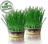 purr paw 2er Pflanzset für Katzengras, Set aus Bio-Samen, Schale und Kompost, fertige...