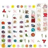 Rubywoo&chili 4 Box Nagel Getrocknete Blume 144 Stücke getrocknete Blume Nail Art 3D...