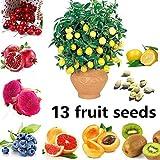 Feli546Bruce Fruchtsamen, 100 Stück Fruchtsamen 13 Arten Feige Apfel Orange Blaubeer Kiwi Zitrone...