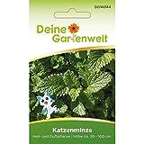 Echte Katzenminze | Nepeta cataria | Minzesamen | Samen für Minze-Pflanzen | Katzenminzesamen |...