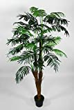Seidenblumen Roß Arekapalme Kokosstamm 180cm ZJ künstliche Palmen Palme Kunstpalmen Kunstpflanzen...