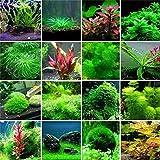 Jennem Samenhaus - 100 Stücke Aquarium Pflanzen bonsai Gras Wasser Wasserpflanze garten Indoor...