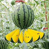 Gold Sweet Watermelon Seeds 8+ (Citrullus lanatus) Bio-Weinfruchtpflanzen Leicht zu züchten...