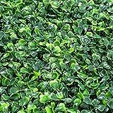 RAUVOLFIA 6 Stück künstliche Buchsbaum-Verkleidungen Formschnitthecke Pflanze Sichtschutz Außen...