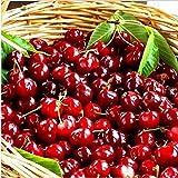 CFPacrobaticS 20 Stück Kirschsamen Köstliche Fruchtsamen Bonsai-Baum Leicht Wachsen, Home Farm Hof...