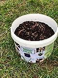 Kompostwürmer 250 Stück in Spezialeimer Garten Kompostbeschleuniger Wurmkomposter Wurmkiste...
