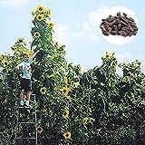 Steelwingsf Garten Topf Samen Für Drinnen Und Draußen, 1 Beutel Blumensamen Hoch Auffällig...