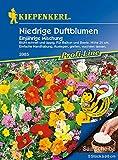 Niedrige Duftblumenmischung, Duftender Steingarten, 5 Saatscheiben à Ø 8cm