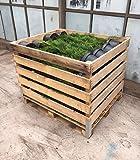 Dehner Thuja'Smaragd', Palette, 80 Stück, ca. 60-80 cm, Heckenpflanze