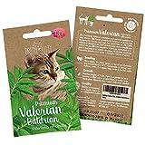 PRETTY KITTY Baldrian Katze Samen: 250 Baldrian Samen (Valeriana officinalis) - Echter Baldrian fr...