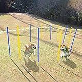 EONO Essentials Ausrstung fr Agility-Training fr Hunde, Spiele im Freien, 12 Flexible Stangen