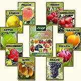 ZLKING 550 Stück Mix Obst Bonsai Samen 2017 Beliebte Bio-Obst und Wassermelone Staudenpflanzensamen...