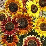 Oce180anYLVUK Sonnenblumenkerne, 1000 Stück Beutel Sonnenblumenkerne Fruchtbare Lebensfähige...