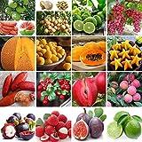 Samen-Paket: 40Pcs Kakao Fruchtsamen: Garten Verschiedene Gemüse, Obst, Samen Nicht-GVO-essbaren...