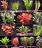 10 Bunde mit über 80 Aquarium-Pflanzen - großes buntes Sortiment für EIN 100 Liter Aquarium,...