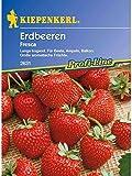 Erdbeeren Fresca