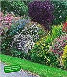 BALDUR-Garten Sommer-Hecken-Kollektion, Blütenhecke Blühhecke 5 Pflanzen Caryopteris, Hypericum,...