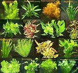 150 Wasserpflanzen XXL Set, Dünger, Aufbereiter, Aquariumpflanzen für alle Bereiche,...